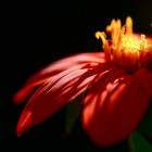 Amazing Flowers High Resolution Wallpapers
